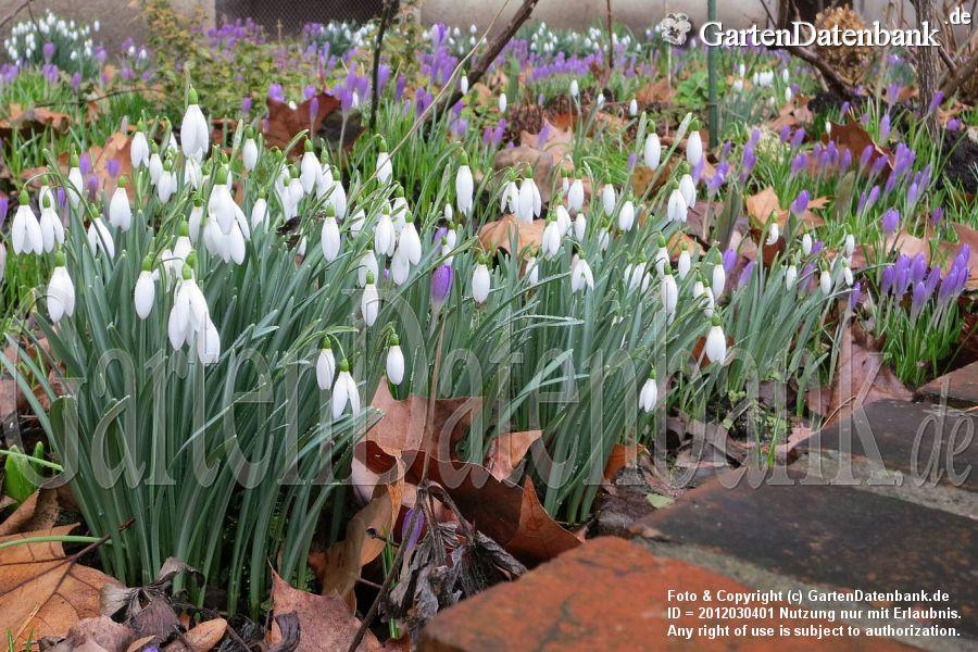 Garten Im Februar Was Blüht Im Februar? Aktuelle Bilder