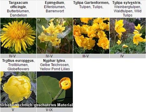 Frhlingsblher gelb  Pflanzen fr nassen boden