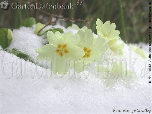Blumendeko Im Dezember