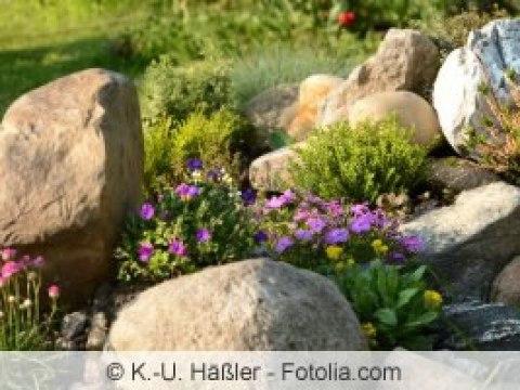 pflanzen für steingarten ideale pflanzen für den steingarten, kiesgarten und kiesbeet