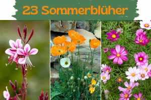 Welche Blumen blühen den ganzen Sommer   Gartendialog.de