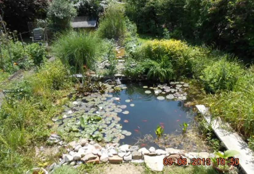 Gartenteich Bilder Beispiele