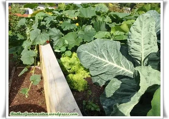 Hochbeet Bepflanzen So Wächst Das Gemüse