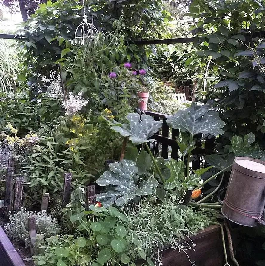 Krauter Und Pflanzen Im Hochbeet