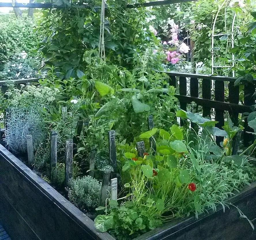 hochbeet bepflanzen krauter