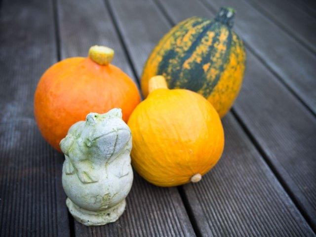 Hokkaido und Zucchini im Herbst 2014
