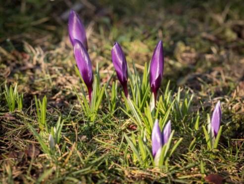 Fruehling-im-Garten-03-2018