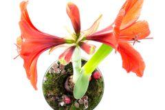Orchideen dngen  Wann womit und wie oft