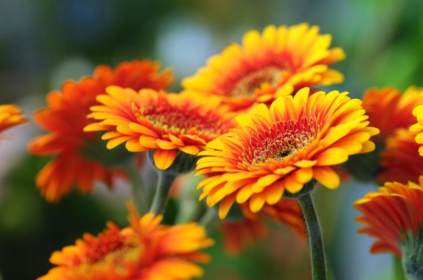 Schnittblumen September