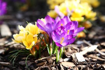 Gartenjournalnet  Die Gartencommunity