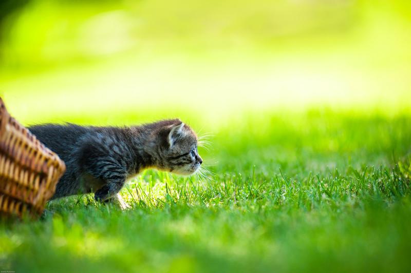 Katzen Von Pflanzen Fernhalten giftige und ungiftige