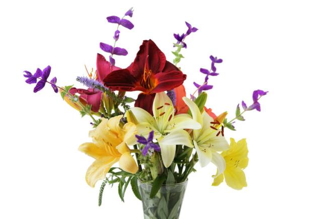 Lilien  Pflanzen Pflegen Vermehren und mehr
