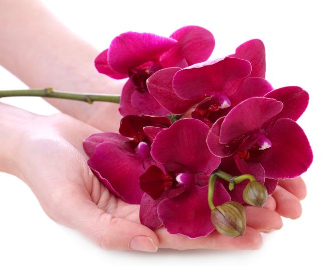 Orchidee  Ihre Bedeutung in der Blumensprache