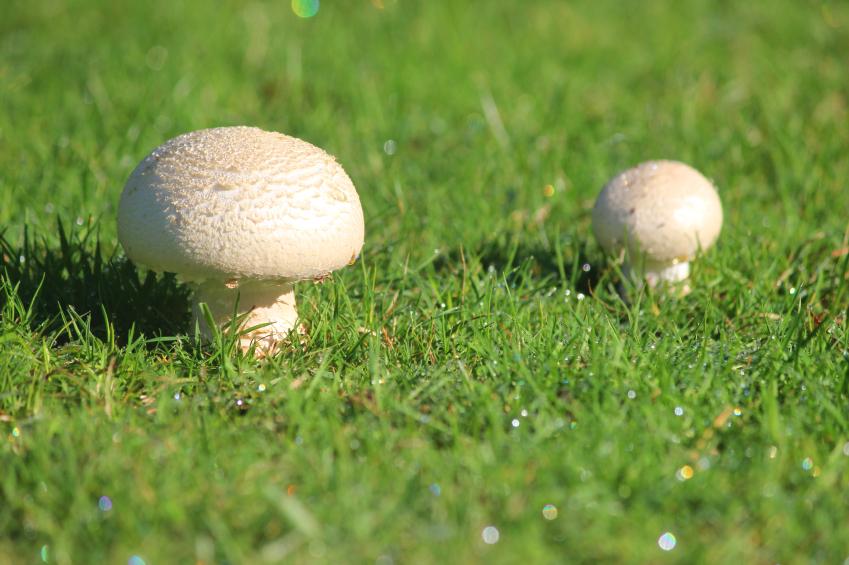 Pilze Im Rasen Bekämpfen Die 5 Besten Tipps