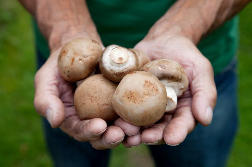 Pilze Im Eigenen Garten Erhalten Beseitigen Oder Züchten