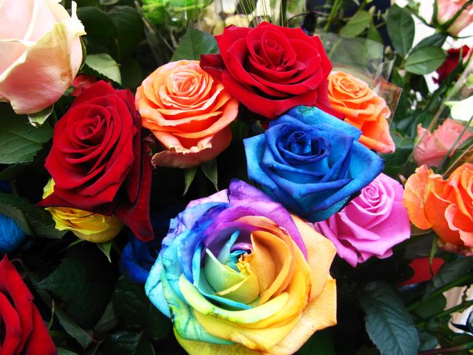 Rose frben  So erschaffen Sie Rosen in jeder erdenklichen Farbe