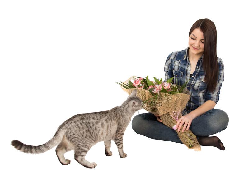 Schleierkraut  Giftig fr Katzen