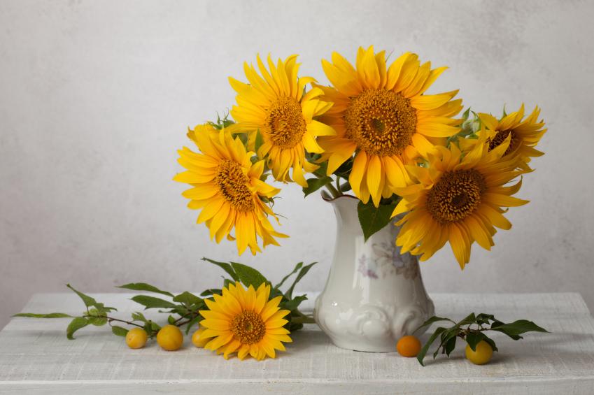 Fall Sunflowers Wallpaper Sonnenblumen 187 Als Schnittblumen Auf Dem Zimmer Pflegen