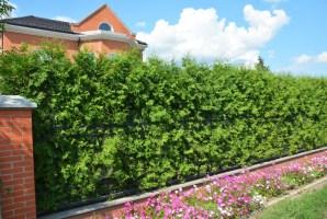 Gartengestaltung Mit Thuja Smaragd