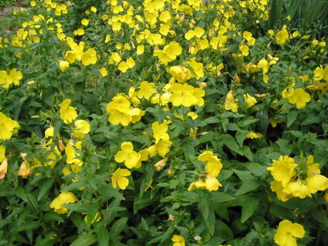 Duft im Garten Duftpflanzen Duftgrten im Gartenkultur