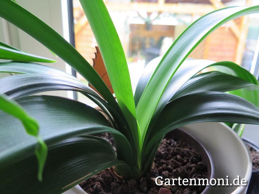 Zimmerpflanzen im Winter Gartenmoni Altes Wissen bewahren
