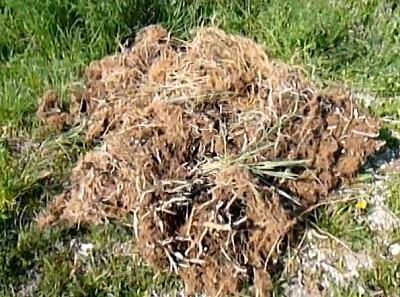 koiteich gartenteich pflanzenfilter wurzelballen