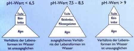 ph_wert_schwankung im gartenteich
