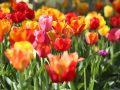 Blumenerde: Test & Empfehlungen (04/20)