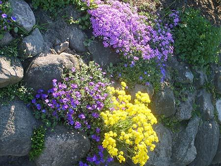 winterharte pflanzen fur steingarten - boisholz,
