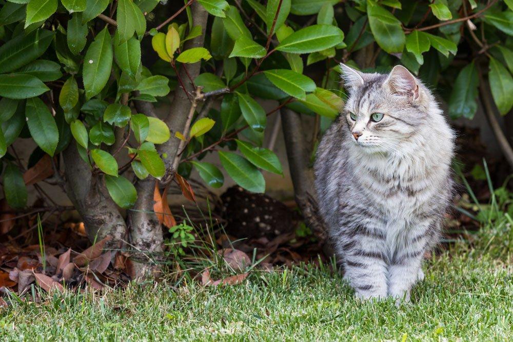 Katzen Aus Dem Garten Vertreiben 5 Effektive Tipps