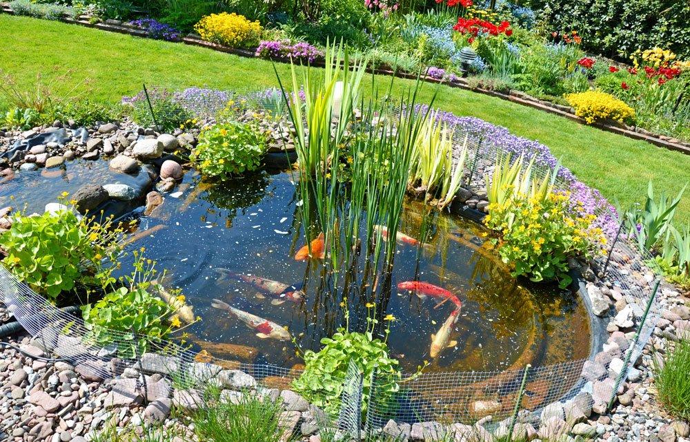 Biotop Anlegen Anleitung Gartenteich Anlegen In 6 Schritten - Planbois