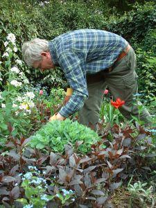Gartenarbeiter beim Ausfexen
