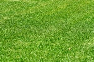 Rasenflächen