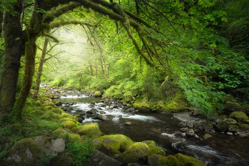 Tanner Creek Oregon