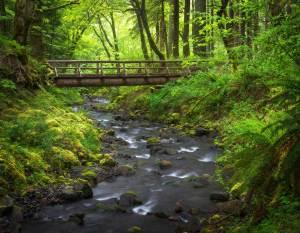 Tanner Creek Columbia River Gorge Oregon