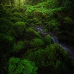 Mean Green Forest Scene