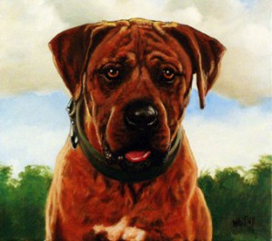 Rufus. Oil painting. Gary Whitley.