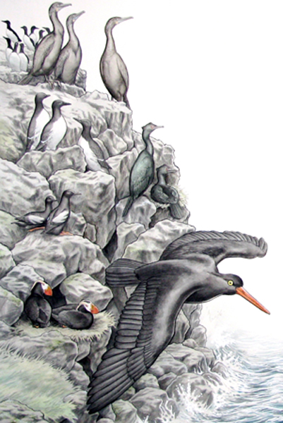 Nesting seabirds on cliffs. Color illustration.
