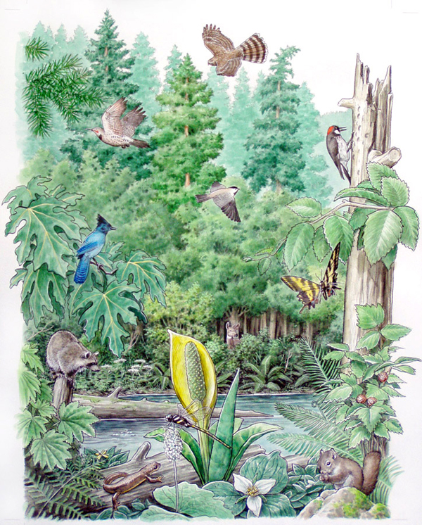 Northwest species for the Oregon Zoo. Features some of the plants, trees, birds and insects found in the Pacific Northwest. By Gary Whitley.