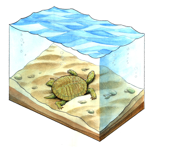 Fossilization of a turtle, part one.