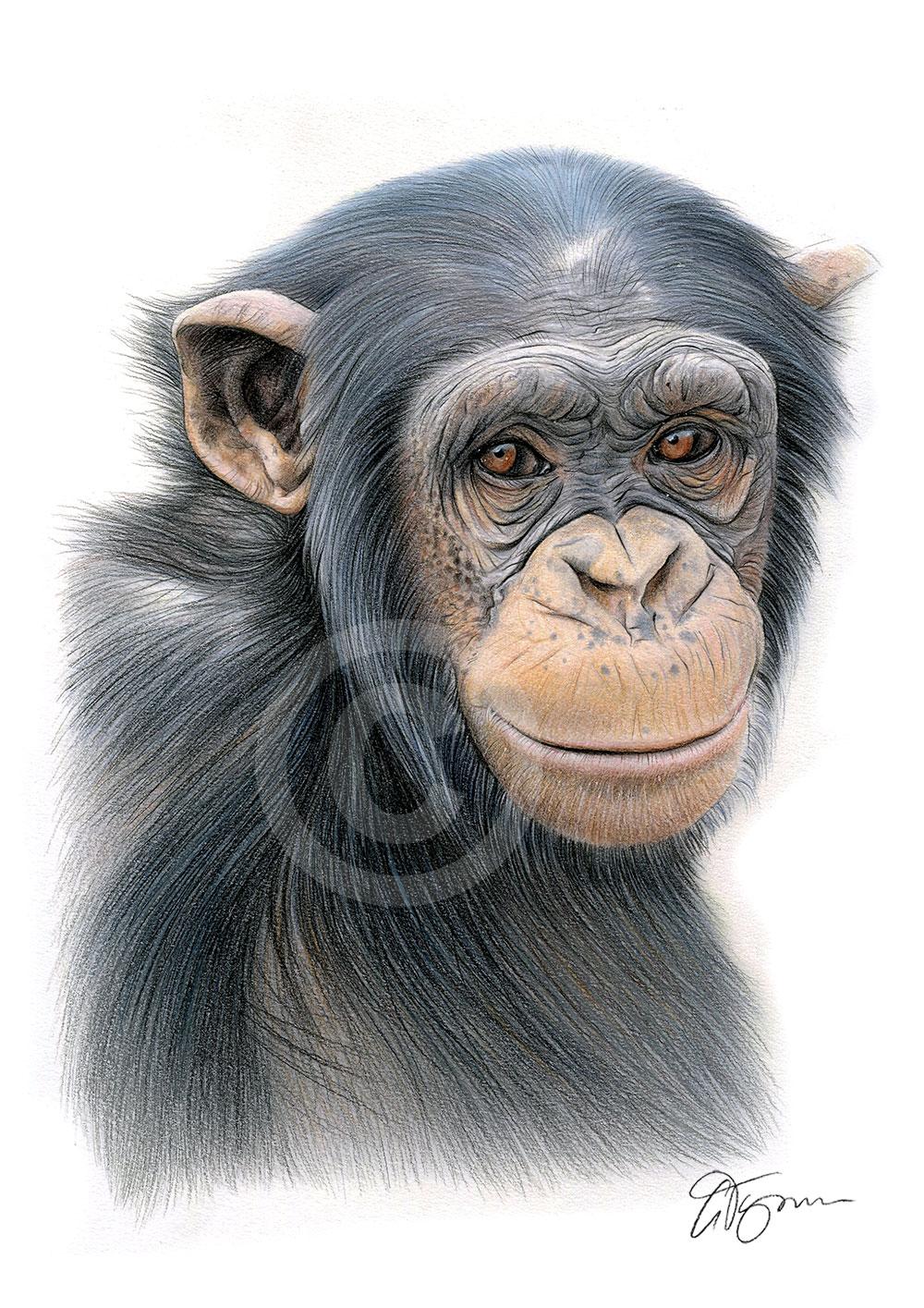 details about chimpanzee colour