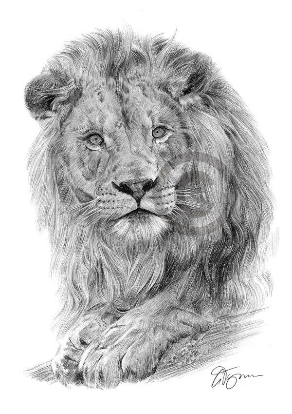 Big Cat Lion Pencil Drawing Art Print A3 A4 Sizes Signed Artwork Artist