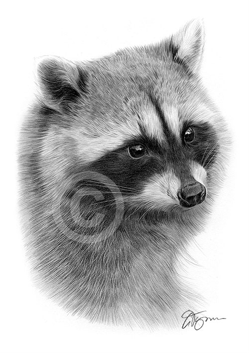 Pet portraits pencil drawings and signed artwork prints