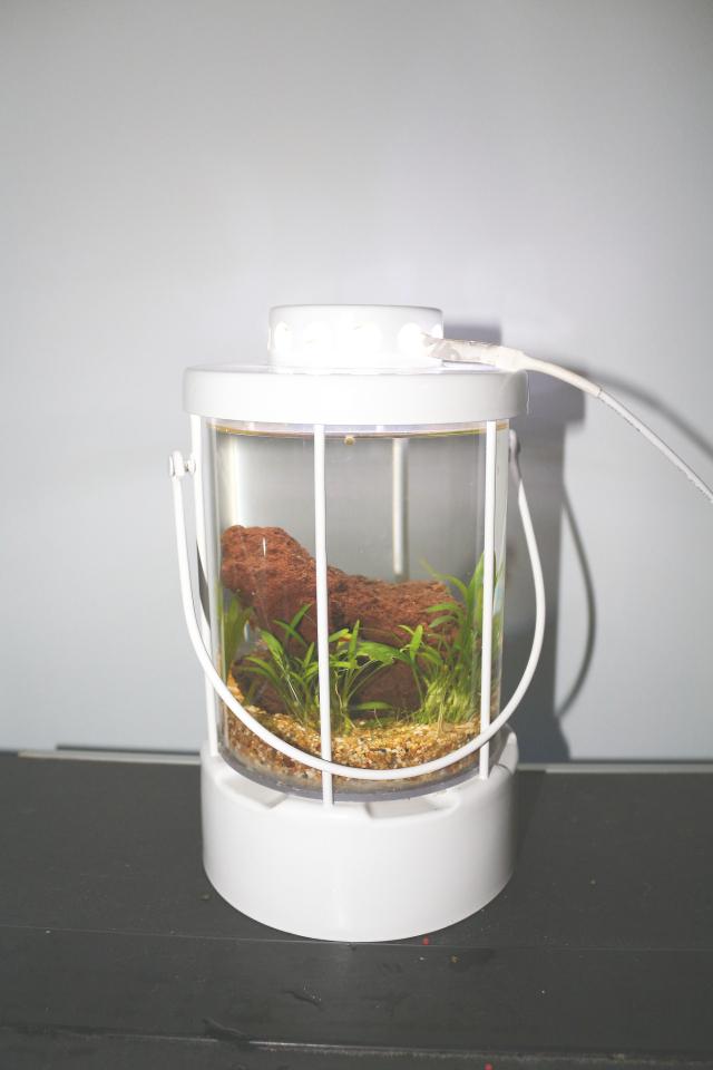 Una lanterna per caridine