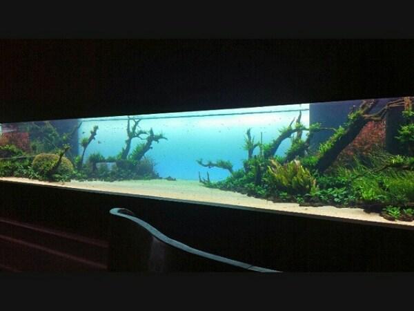 L'acquario di Amano più Grande del mondo