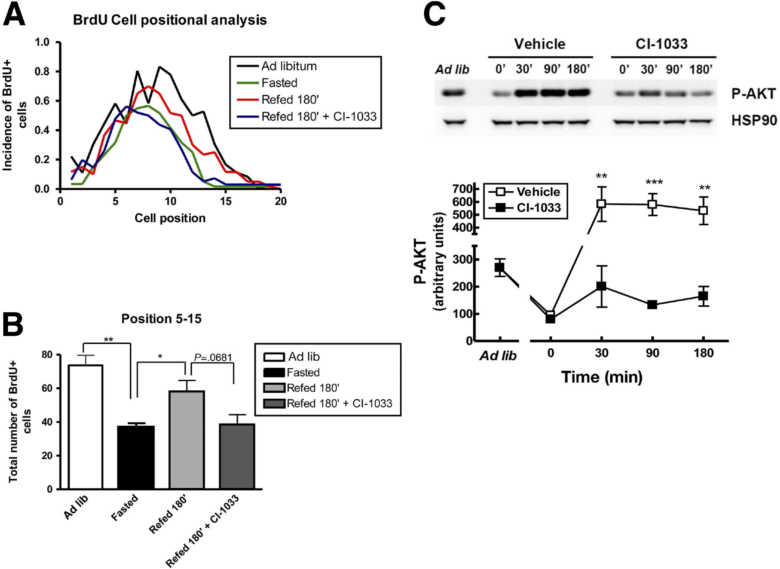 Erbb Activity Links The Glucagon Like Peptide 2 Receptor To Refeeding Induced Adaptation In The