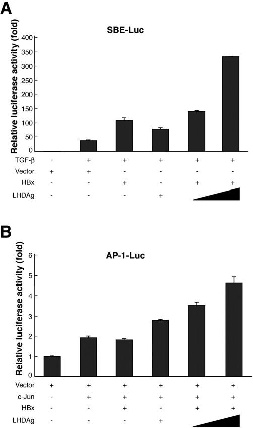 Large Hepatitis Delta Antigen Modulates Transforming