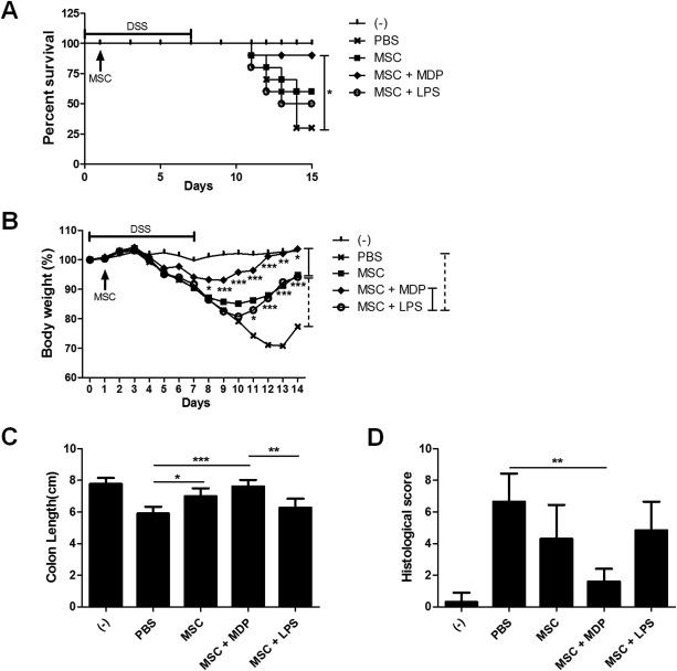 Human Umbilical Cord Blood Mesenchymal Stem Cells Reduce