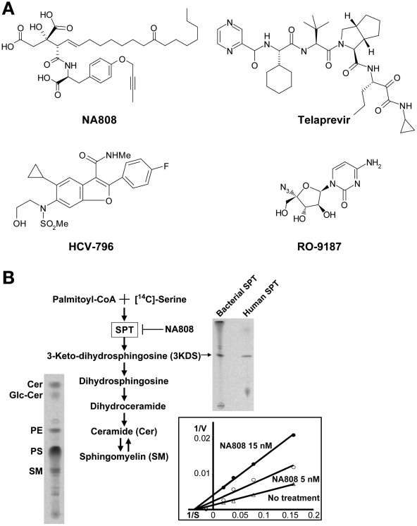 A Serine Palmitoyltransferase Inhibitor Blocks Hepatitis C