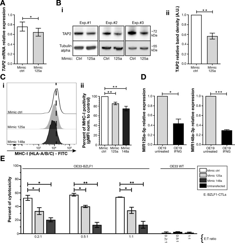 microRNA 125a Regulates MHC-I Expression on Esophageal
